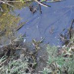 Stovky metrov brehov boli posiate tohtoročným plôdikom