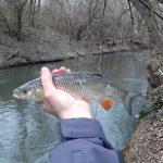 Vďaka teplej vode sú ryby aktívne aj v zime